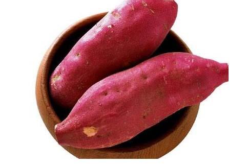 trồng khoai lang, khoai lang