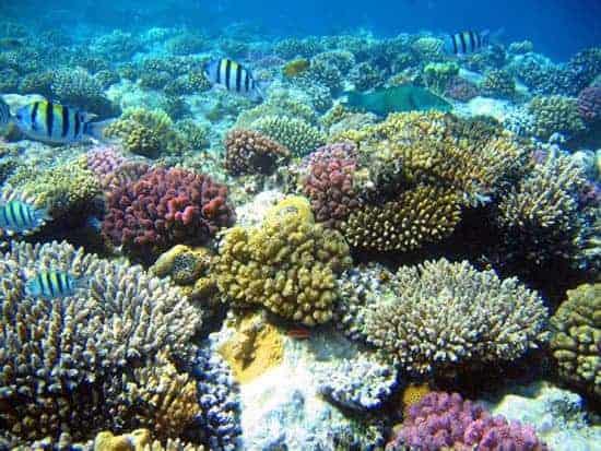 nuôi san hô