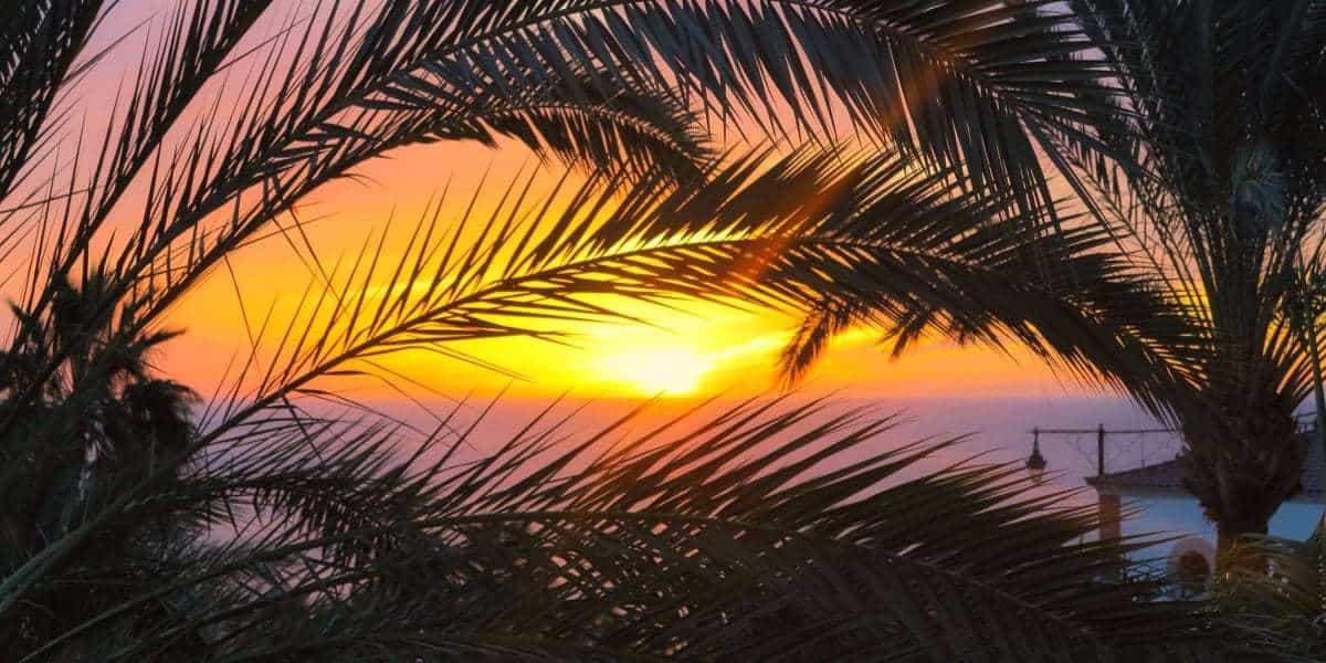 trồng dừa sáp