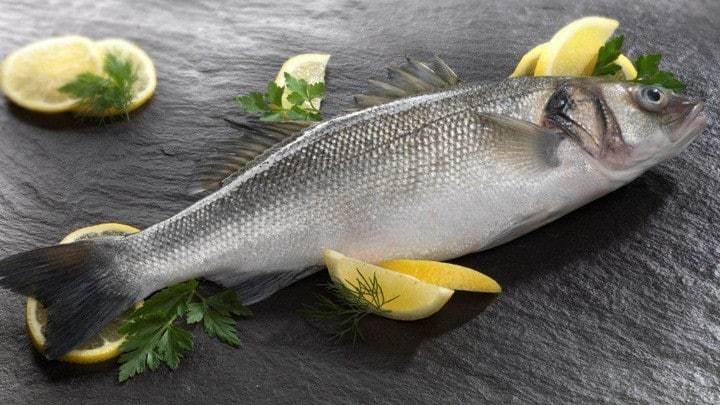 nuôi cá chẽm trong ao