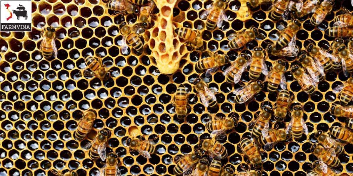 nuôi ong ký sinh