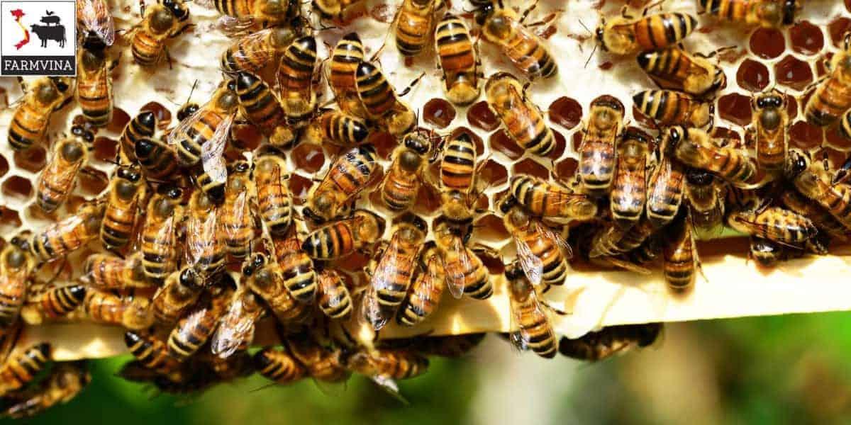 thùng nuôi ong