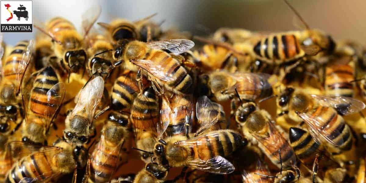 tỷ phú nuôi ong