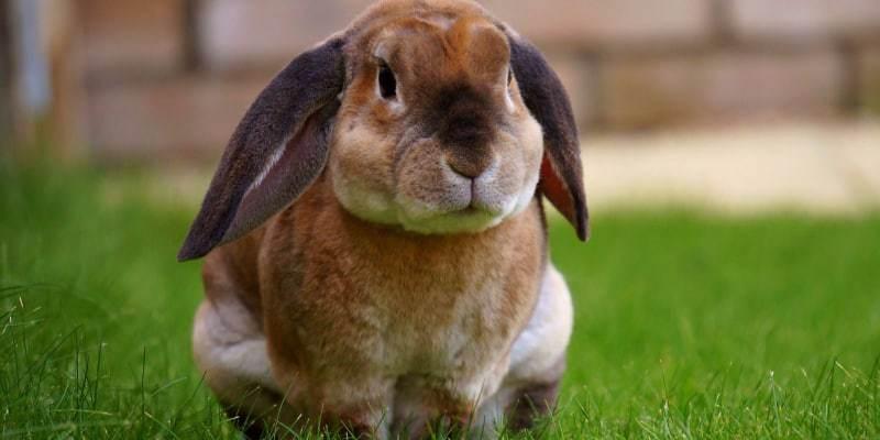 sức khoẻ thỏ