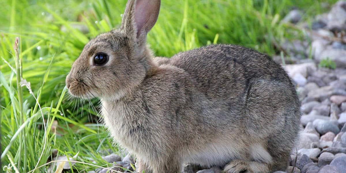 thức ăn nuôi thỏ