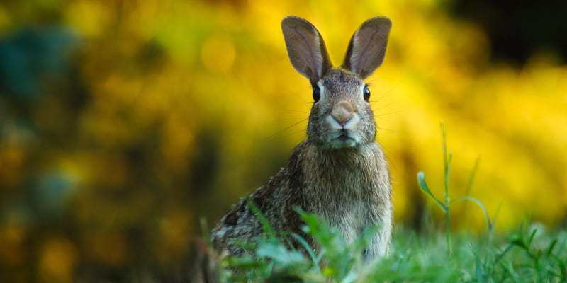 nuôi thỏ công nghiệp