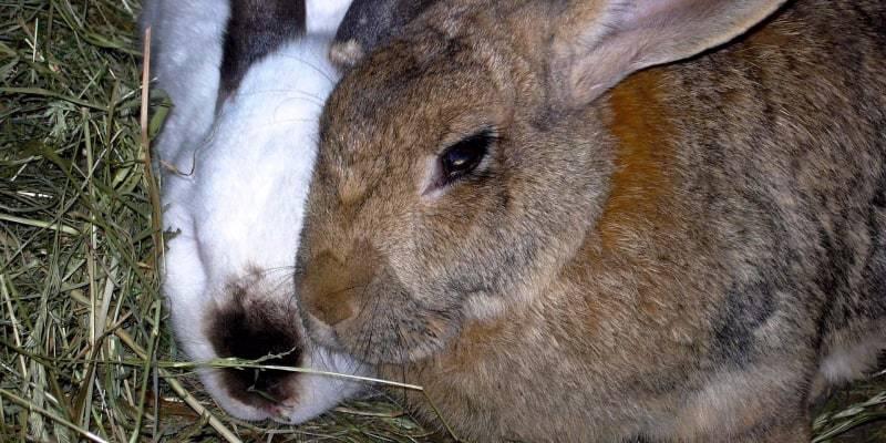 nuôi thỏ sinh sản