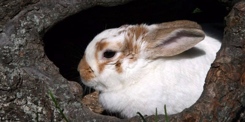 nuôi thỏ con