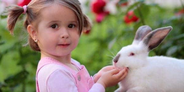trị bệnh cho thỏ