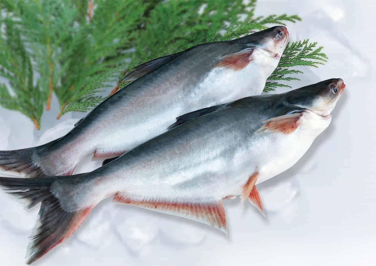 thức ăn của cá tra