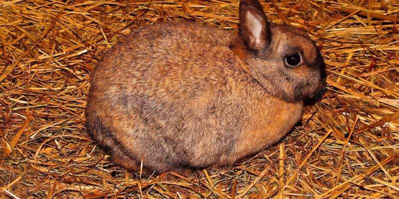 chuồng trại nuôi thỏ công nghiệp