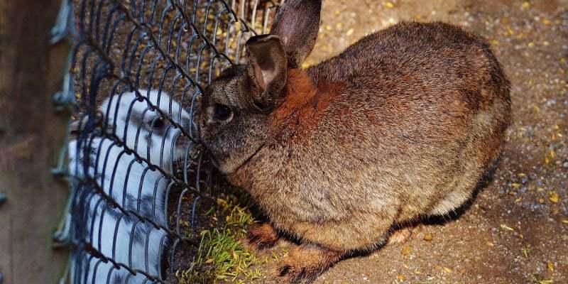 cách làm trại thỏ