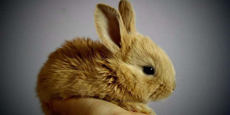 chi phí nuôi thỏ