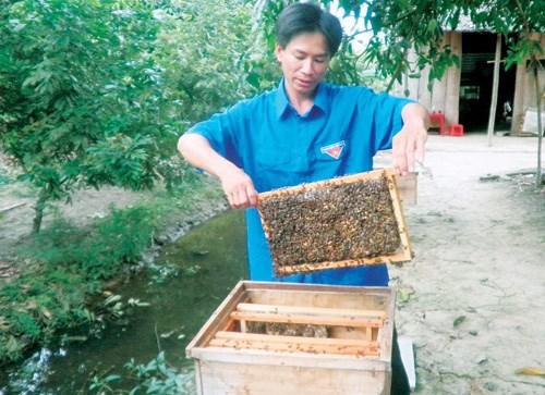khởi nghiệp nuôi ong