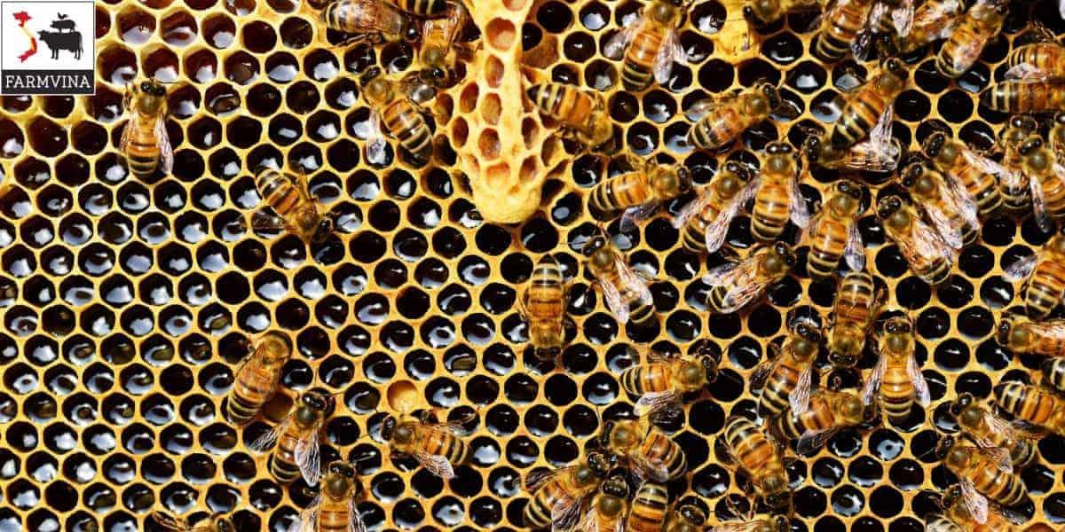 hướng dẫn nuôi ong