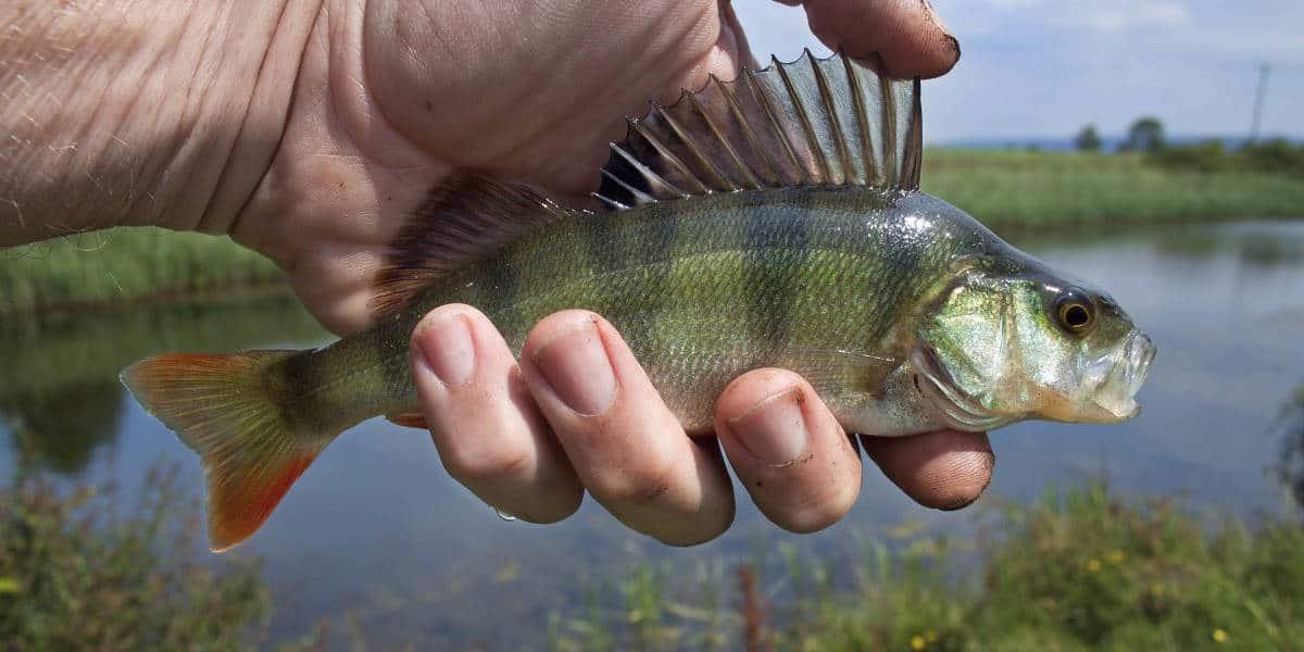 câu cá ở ao hồ