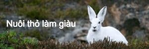 nuôi thỏ