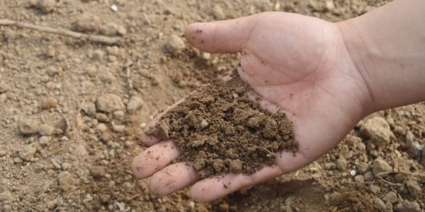 môi trường nuôi trùn
