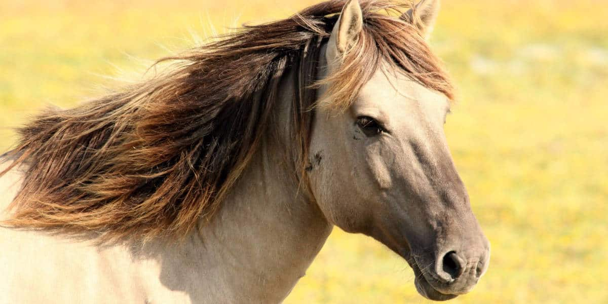kỹ thuật nuôi ngựa