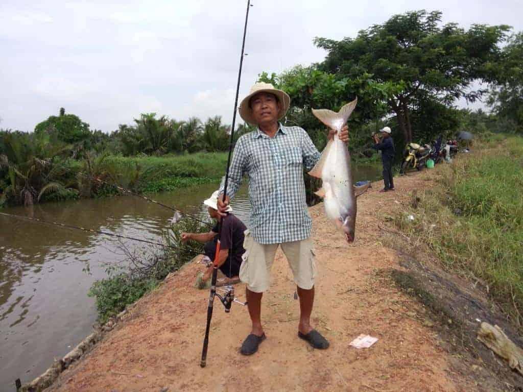 mồi câu cá tra