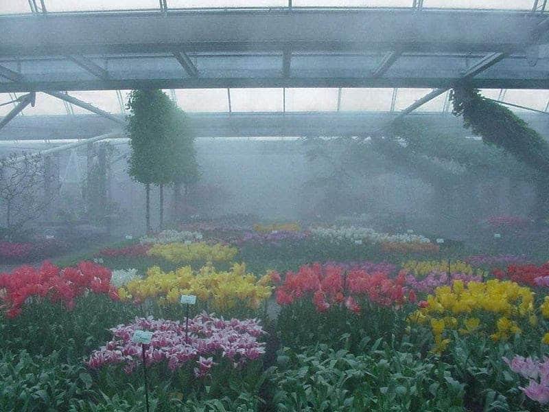 tưới phun sương