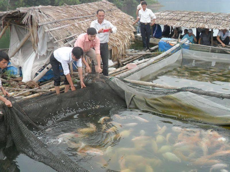 mô hình nuôi cá chép