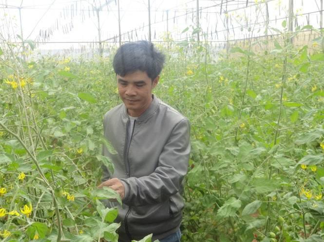 trang trại rau hữu cơ