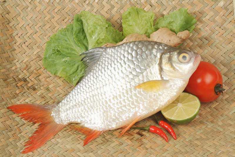 bệnh cá mè hoa