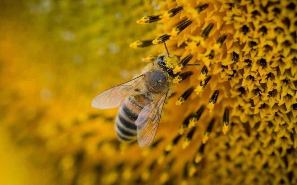 địa điểm trại nuôi ong