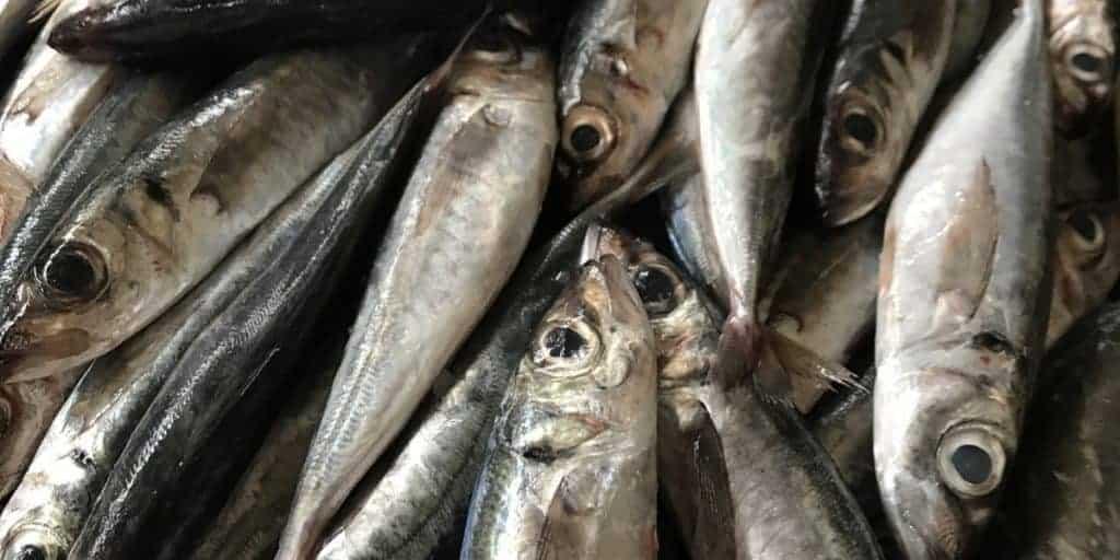 công nghệ nuôi cá