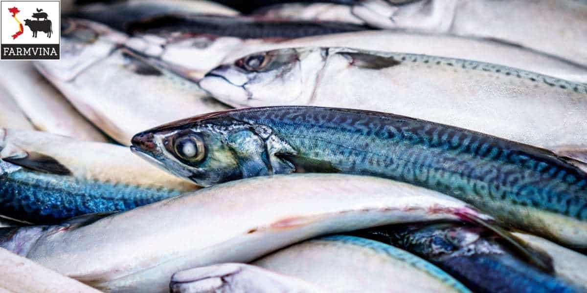 nuôi cá nước ngọt
