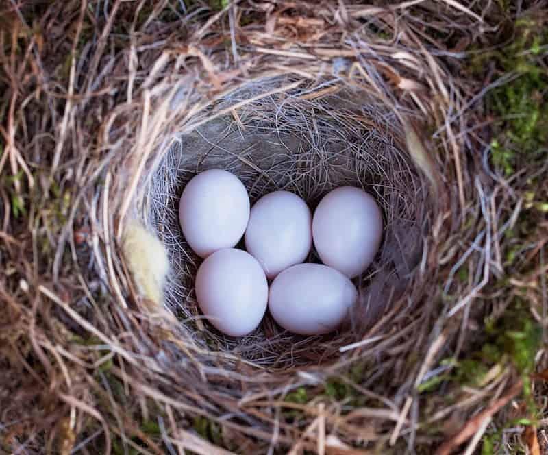 trứng yến