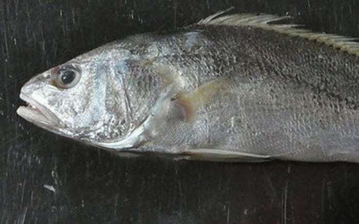 cá đù