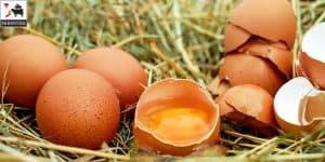 máy ấp trứng tự chế