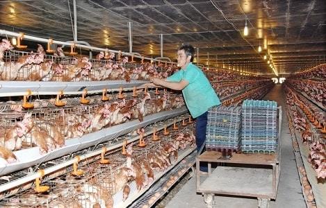 Chăn nuôi Việt Nam 2018