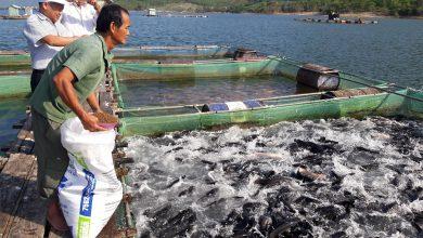 hướng dẫn nuôi cá