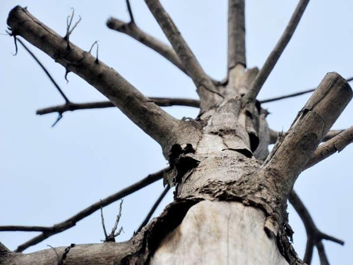 làm cây chết