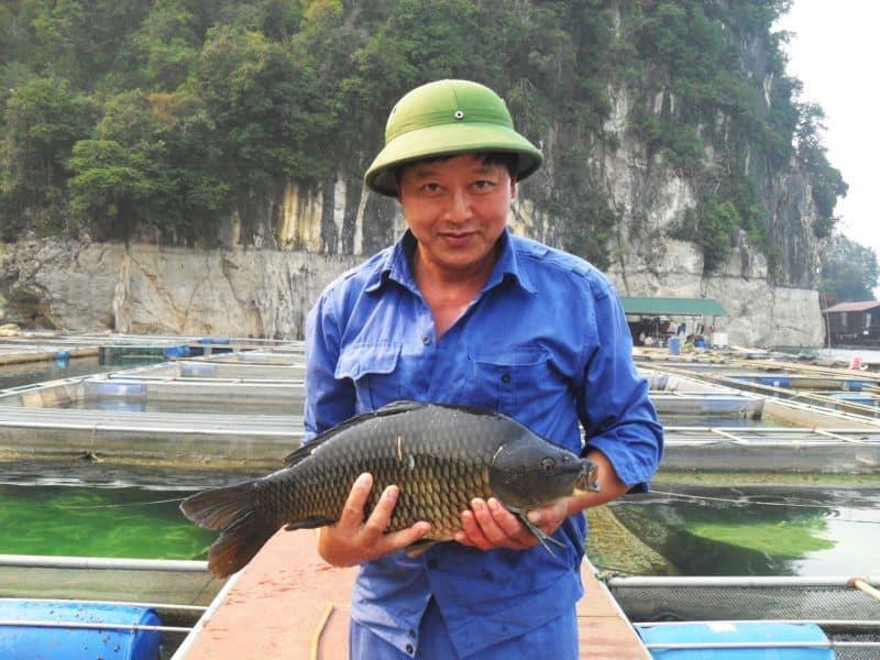 giá cá chép giòn