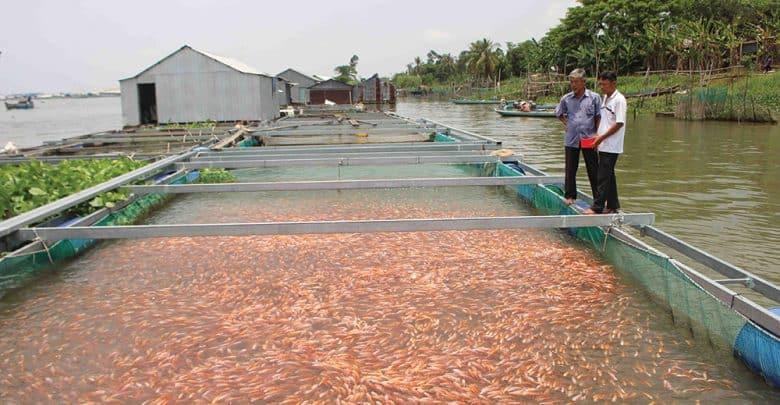 xuất khẩu cá nước ngọt