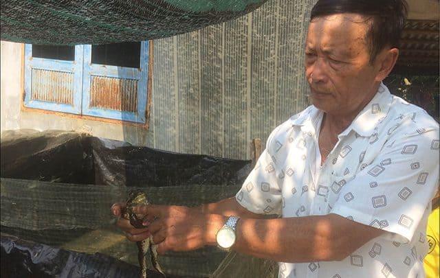 nuôi ếch không sử dụng kháng sinh