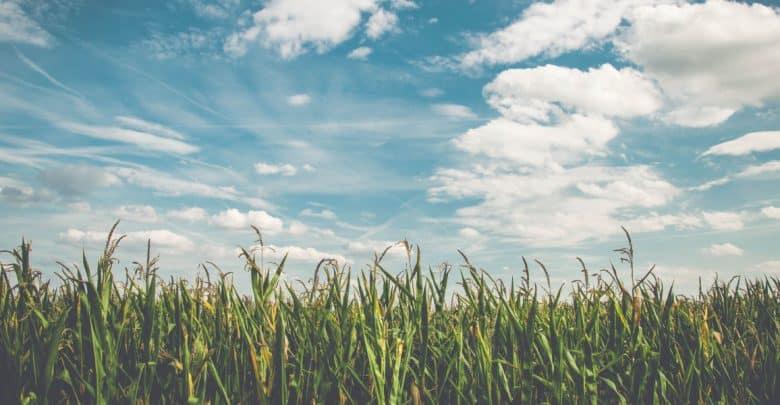 bài viết hay nông nghiệp
