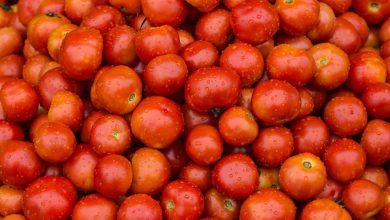 bón phân cho cà chua