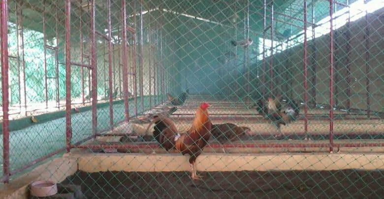 chuồng nuôi gà
