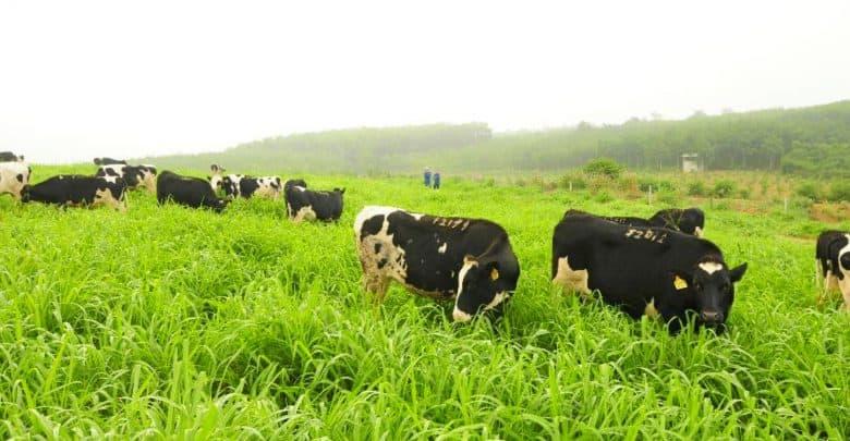 đồng cỏ chăn nuôi