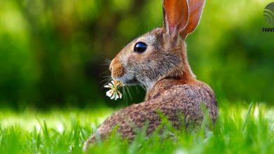 chuồng nuôi thỏ