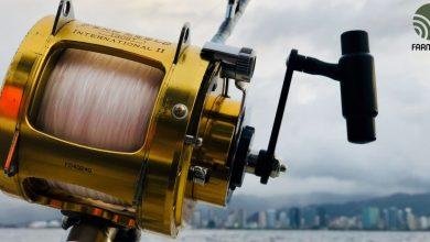 câu cá spinner